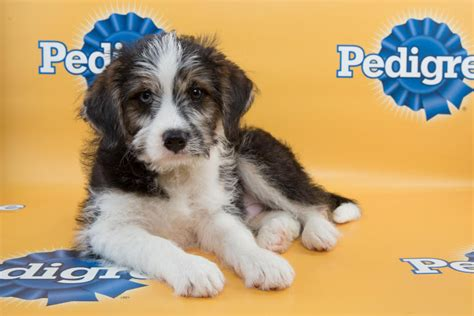who won the puppy bowl determining the most and least likely mvp candidates for the 2015 puppy bowl for the