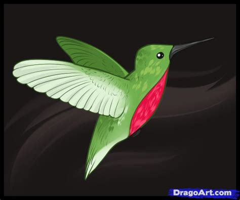 how to draw hummingbirds step by step birds animals