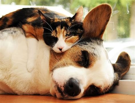 cuscini animali gatti usano cani come cuscini keblog