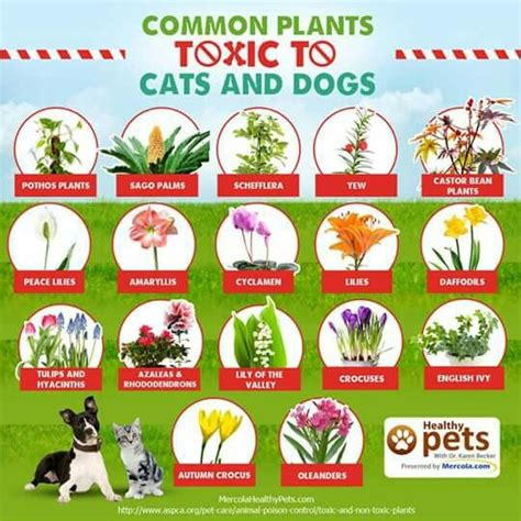 common house plants poisonous to pets 17 best images about cat and care on dangerous foods for dogs itchy and for