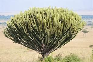 Tropical Grassland Plants List - types of trees grass amp shrubs in the savanna hunker