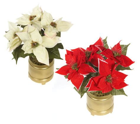 fiber optic poinsettia arrangement with pot qvc com