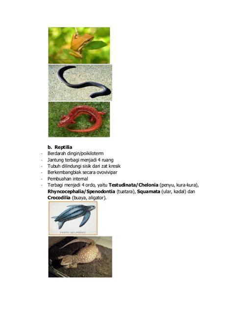 animalia biology