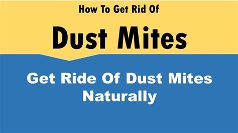 how to get rid of dust mites in bed how to get rid of dust mites naturally youtube