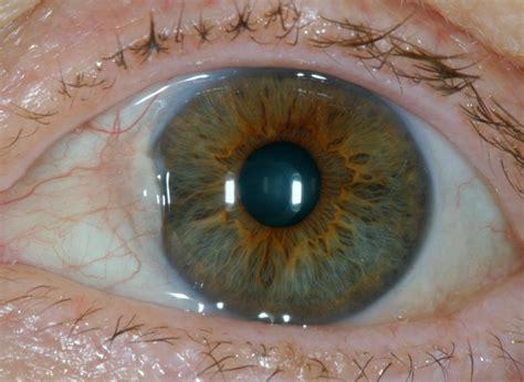 this model got an eyeball eye eyeball 15 eyeball png for free
