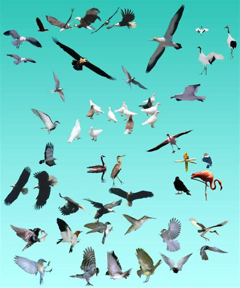 Total 3d Home Design Software Free Download all kinds of birds footage