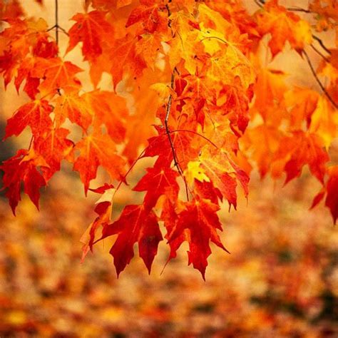 20 beautiful trees and shrubs for fall color