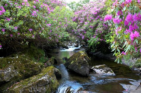 forget everything you know about soil when growing rhododendrons eastern plant