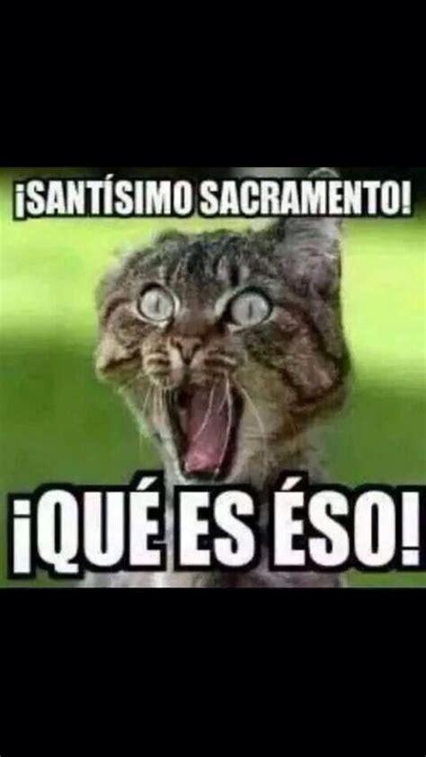 Gato Meme - best 25 meme gato ideas on pinterest gatos chistes