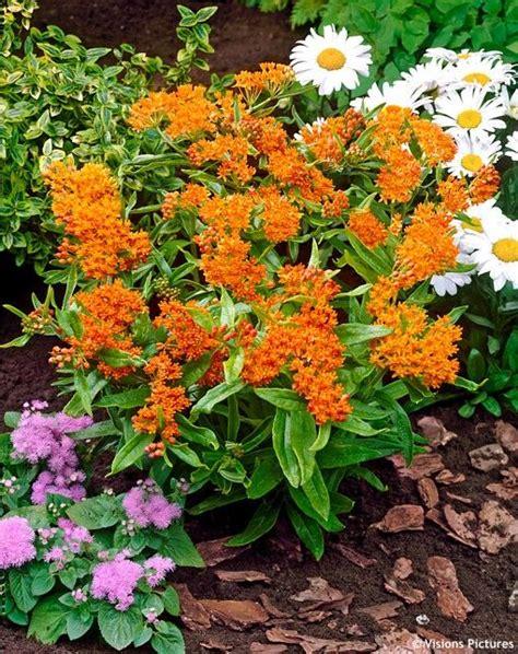 high heat plants high heat plants 28 images heat resistant plants for