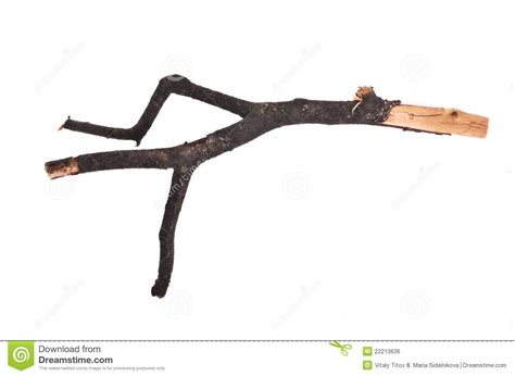 twig l stick or twig stock photo image of nature bark grungy