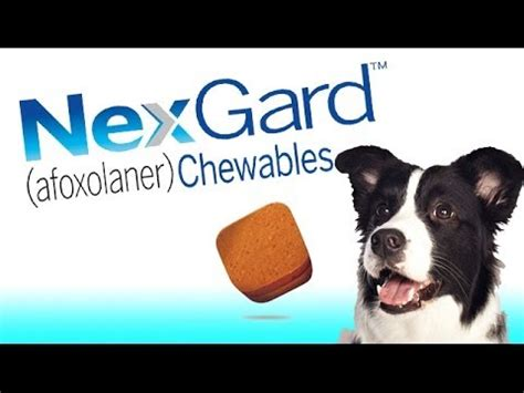 chewable flea and tick for dogs nexgard flea and tick chewable for dogs by merial frontline vet labs