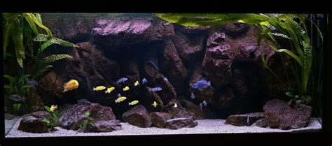 aquascaping african cichlid aquarium 1709 best images about acuariosypeces es on pinterest