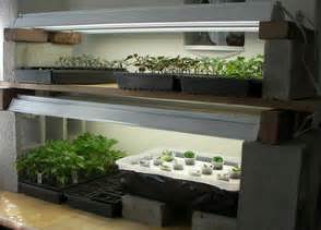 starting seeds indoors how to