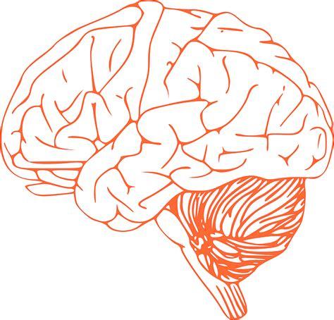 imagenes sensoriales olfativas concepto 191 qu 233 es sistema nervioso central definici 243 n concepto y