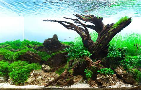 aquarium design competition planted aquarium design contest 2013 results of members