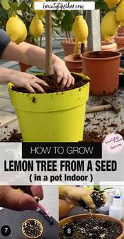 what time of year do you plant fruit trees how to grow lemon tree from seed indoors fast