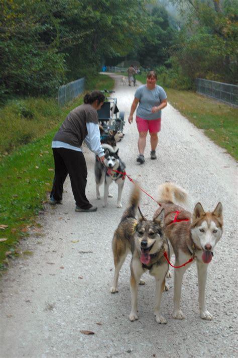 sled commands maryland sledding photos of siberian husky and husky mix sled dogs
