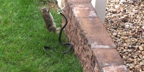 Snake Won T Shed by Rabbit Vs Snake You Won T Believe Who Wins Cruise1323