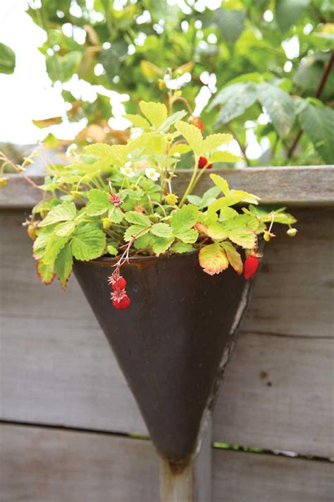 container gardening strawberries container gardening made easy