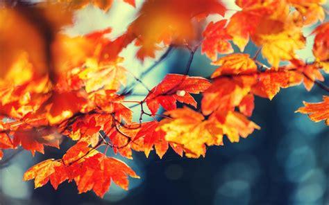 fall colors fall foliage finder the barker team realtors