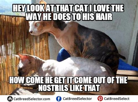 Hairless Cat Meme - hairless cat memes cat breed selector