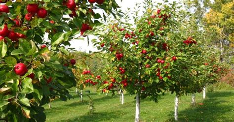fruit tree orchard design fruit orchard pictures