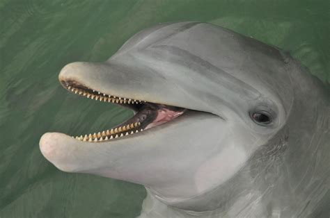 dolphins a kid s book of cool images and amazing facts about dolphins nature books for children series volume 5 books dolphin facts dolphin research center