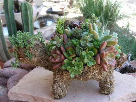 turtle succulent planter 10 best images about succulent turtles ndb on pinterest