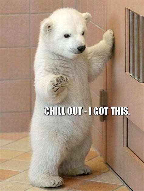 Cute Baby Animal Memes - 25 funny animal memes to make you laugh till you drop