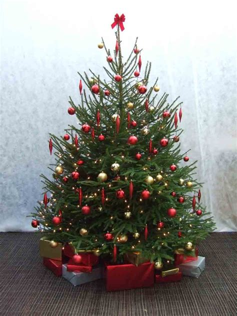 palmbrokers catalogue christmas trees props for hire