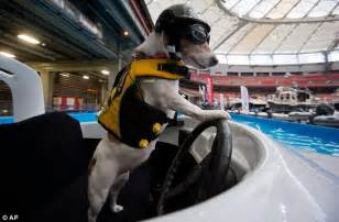 dog driving boat video meet duma the wakeboard riding speedboat driving jack
