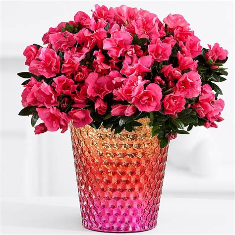 Flowering Plants Potted Flowers Flower Plants Plants Delivery