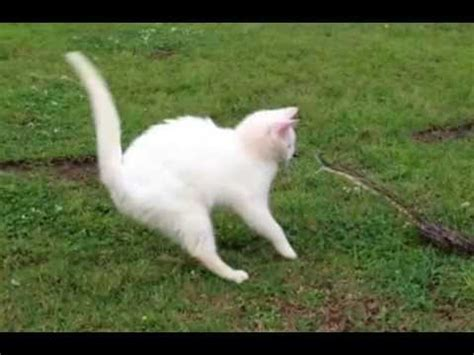 cat vs fight cat vs snake fight