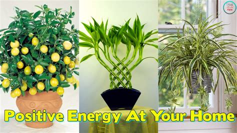 10 best house plants for a healthy home these 10 plants improve the positive energy at your home