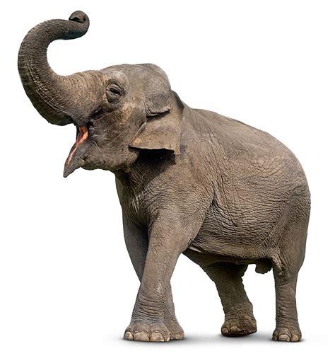 google images elephant png buscar con google 193 llatok2 pinterest