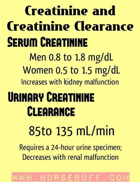 creatinine urine mg dl best 25 creatinine clearance ideas on bun