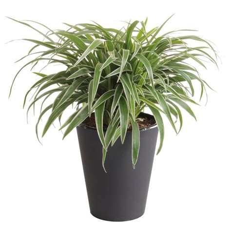 home depot plants in store home design 2017