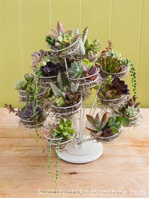 Succulents In A Cupcake Stand Stand For Table Succulent Plant Centerpiece