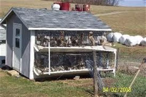 amish puppy mills pa 7 best images about amish puppy mills on the o jays see and amish