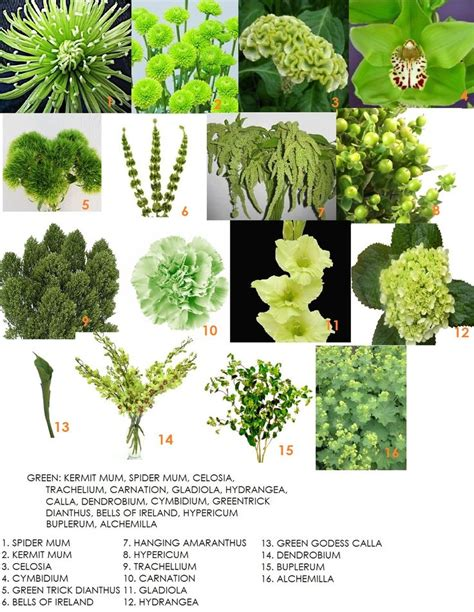 a florist is advertising five types of bouquets green flower types for bouquets flowers pinterest