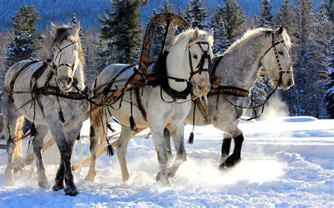 christmas wallpaper with horses horses of christmas desktop wallpaper