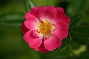 allocin 233 forum g 233 n 233 ral une victime une fleur