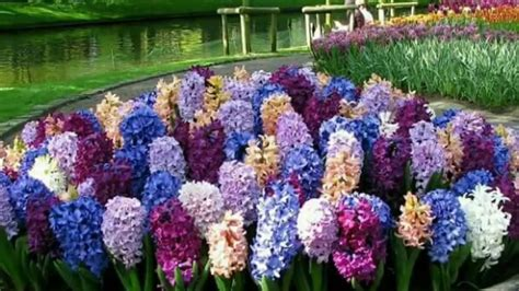 Beautiful Flowers Garden In The World Www Pixshark Com Beautiful Flower Garden In The World