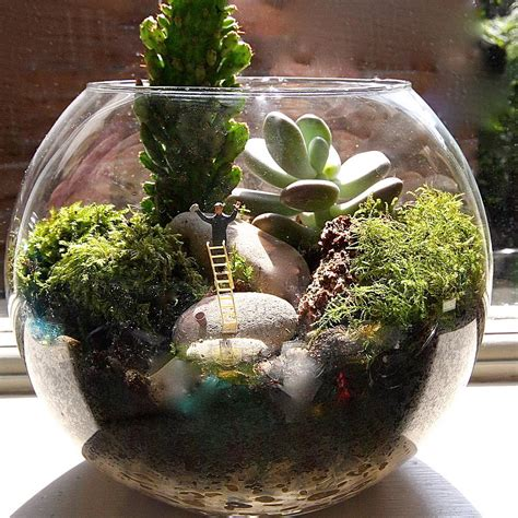 mini world terrarium kit window cleaner by london garden trading notonthehighstreet com
