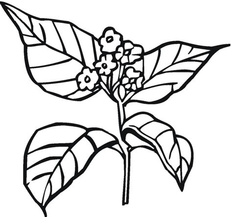 Free Coloring Pages Of Bean Plant Life Cycle Coloring Pages Plants