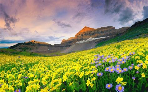 wallpaper flower valley wallpaper flowers india national park valley of flowers