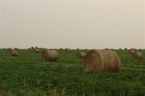 farm hay bales free stock photo domain pictures