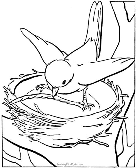 coloring page nest bird nest coloring page coloring home