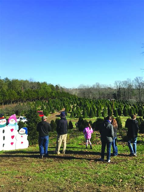 family favorites belmont christmas tree farm